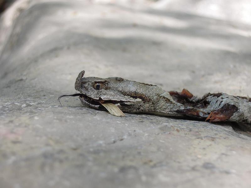 Je milejší nalézat zmije živé, na mrtvých jdou alespoň lépe zkoumat detaily