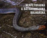 Štíhlovka východní - Coluber (Hierophis) caspius