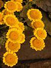 pobřežní flóra