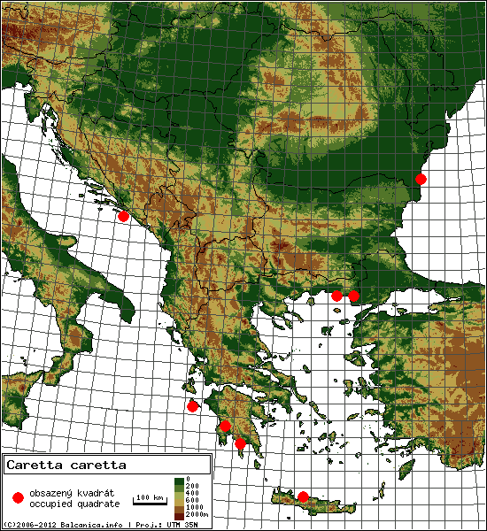 Caretta caretta - mapa všech obsazených kvadrátů, UTM 50x50 km