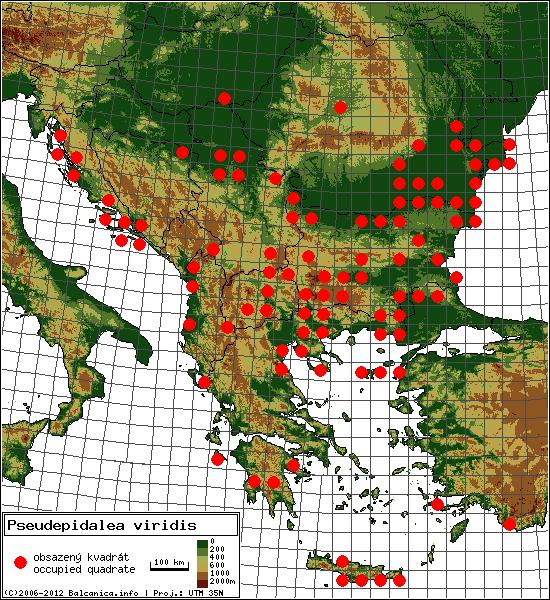 Pseudepidalea viridis - mapa všech obsazených kvadrátů, UTM 50x50 km