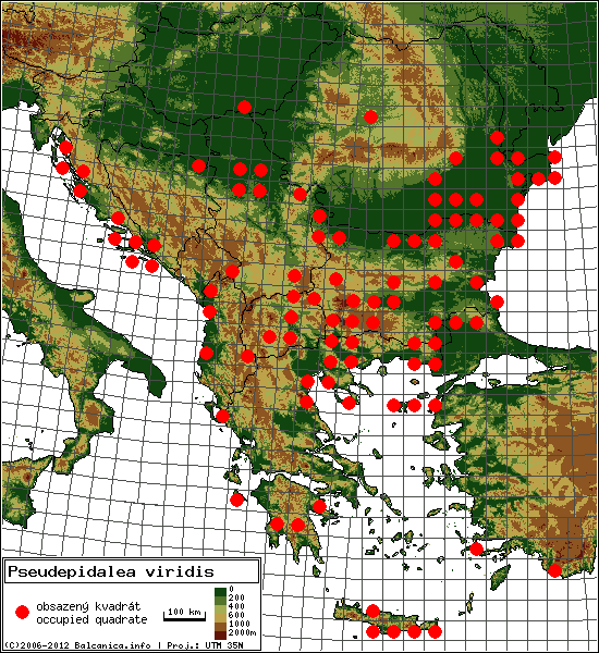 Pseudepidalea viridis - Map of all occupied quadrates, UTM 50x50 km