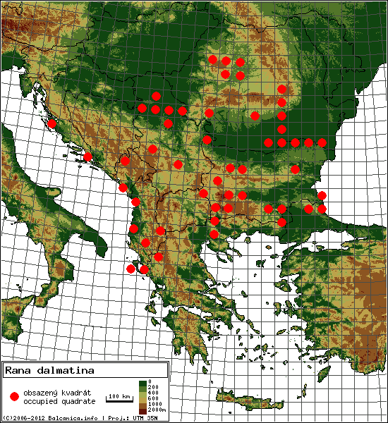 Rana dalmatina - Map of all occupied quadrates, UTM 50x50 km