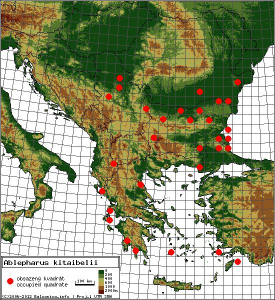 Ablepharus kitaibelii - mapa všech obsazených kvadrátů, UTM 50x50 km