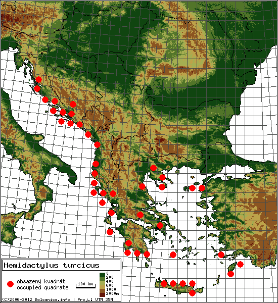 Hemidactylus turcicus - Map of all occupied quadrates, UTM 50x50 km