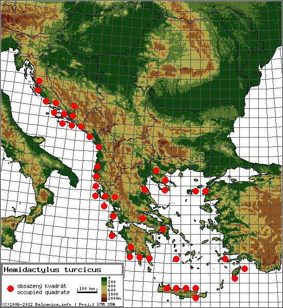 Hemidactylus turcicus - mapa všech obsazených kvadrátů, UTM 50x50 km