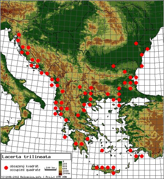 Lacerta trilineata - mapa všech obsazených kvadrátů, UTM 50x50 km