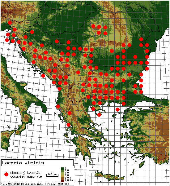 Lacerta viridis - mapa všech obsazených kvadrátů, UTM 50x50 km