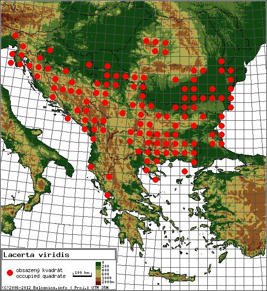 Lacerta viridis - Map of all occupied quadrates, UTM 50x50 km