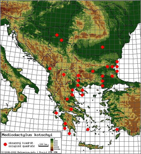 Mediodactylus kotschyi - mapa všech obsazených kvadrátů, UTM 50x50 km