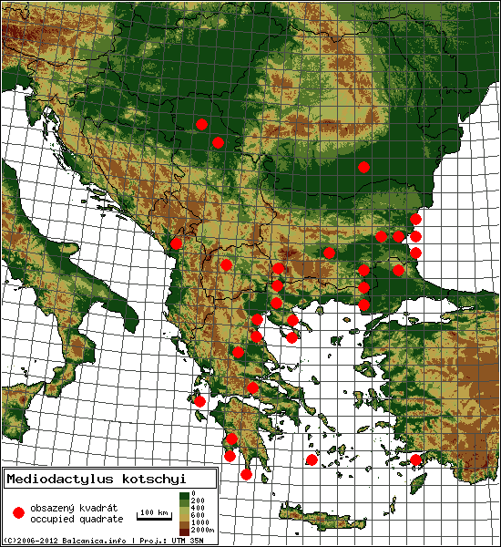 Mediodactylus kotschyi - Map of all occupied quadrates, UTM 50x50 km