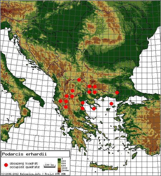 Podarcis erhardii - mapa všech obsazených kvadrátů, UTM 50x50 km
