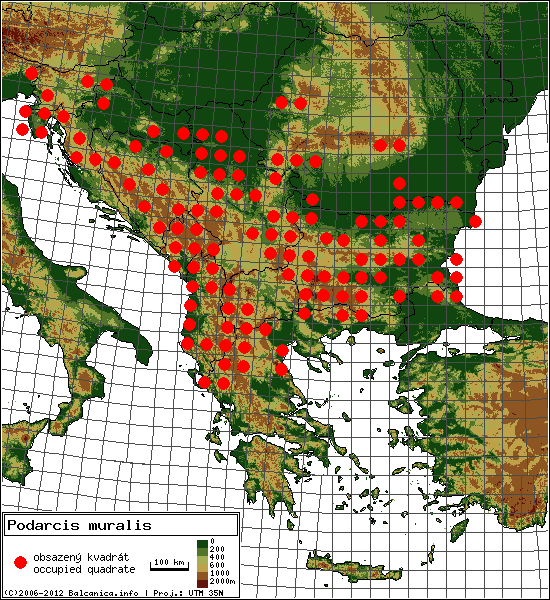 Podarcis muralis - Map of all occupied quadrates, UTM 50x50 km