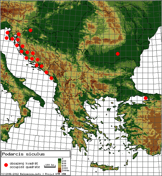 Podarcis siculus - mapa všech obsazených kvadrátů, UTM 50x50 km