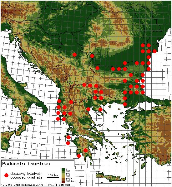 Podarcis tauricus - Map of all occupied quadrates, UTM 50x50 km