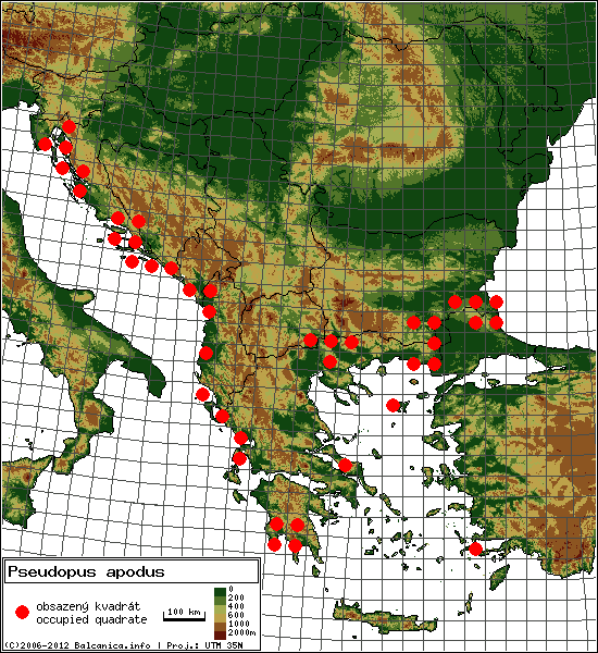 Pseudopus apodus - mapa všech obsazených kvadrátů, UTM 50x50 km