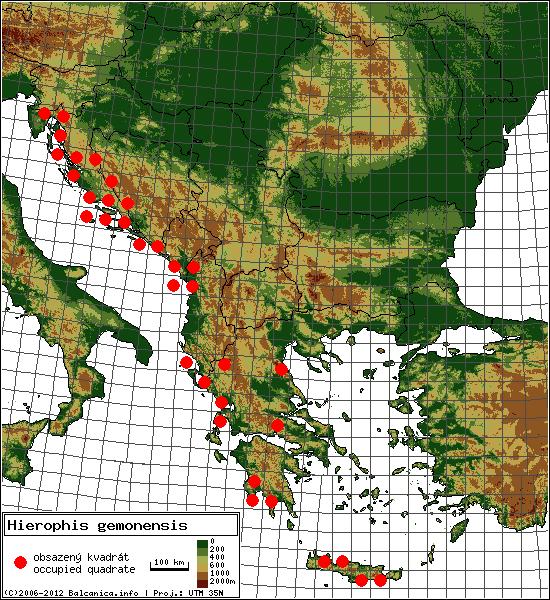 Hierophis gemonensis - mapa všech obsazených kvadrátů, UTM 50x50 km