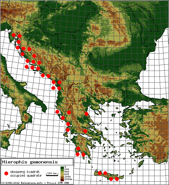 Hierophis gemonensis - Map of all occupied quadrates, UTM 50x50 km