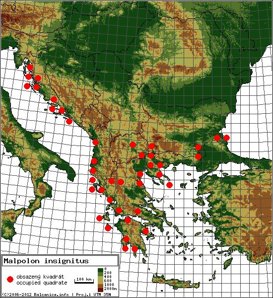 Malpolon insignitus - mapa všech obsazených kvadrátů, UTM 50x50 km