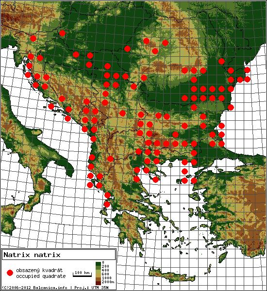 Natrix natrix - mapa všech obsazených kvadrátů, UTM 50x50 km