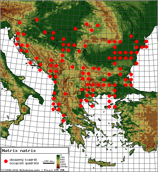 Natrix natrix - Map of all occupied quadrates, UTM 50x50 km
