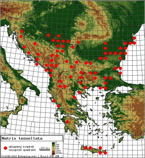 Natrix tessellata - mapa všech obsazených kvadrátů, UTM 50x50 km