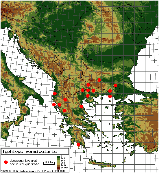 Typhlops vermicularis - Map of all occupied quadrates, UTM 50x50 km