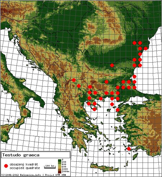 Testudo graeca - mapa všech obsazených kvadrátů, UTM 50x50 km