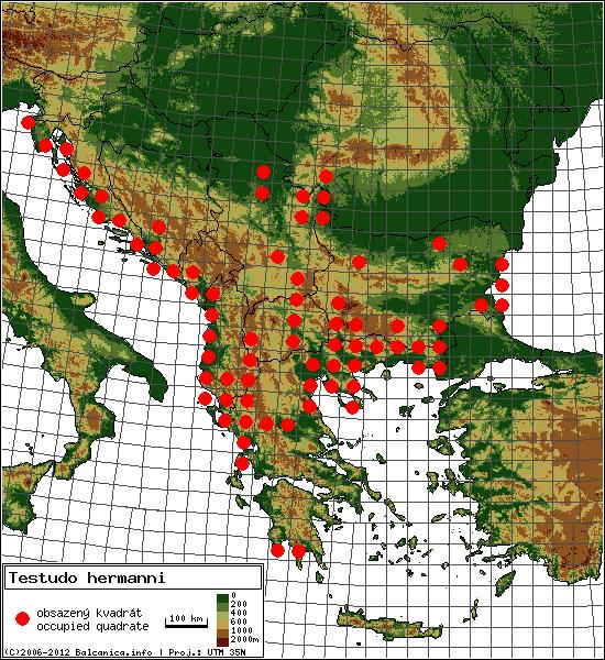 Testudo hermanni - mapa všech obsazených kvadrátů, UTM 50x50 km