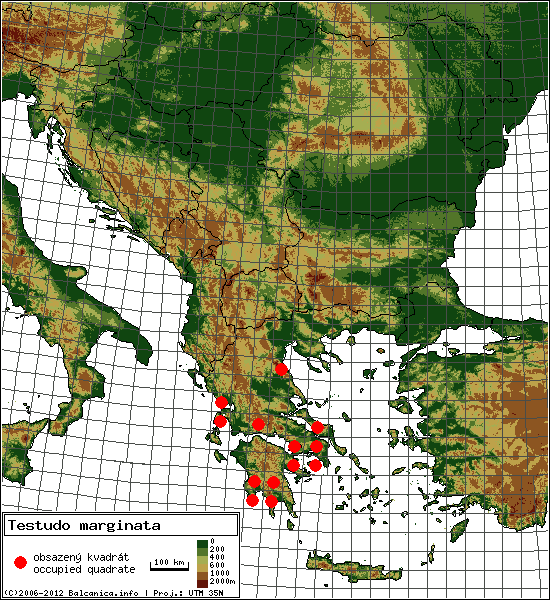 Testudo marginata - Map of all occupied quadrates, UTM 50x50 km