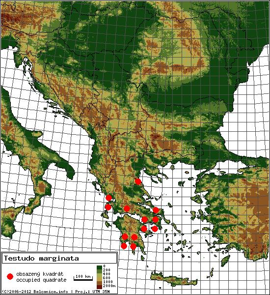 Testudo marginata - mapa všech obsazených kvadrátů, UTM 50x50 km