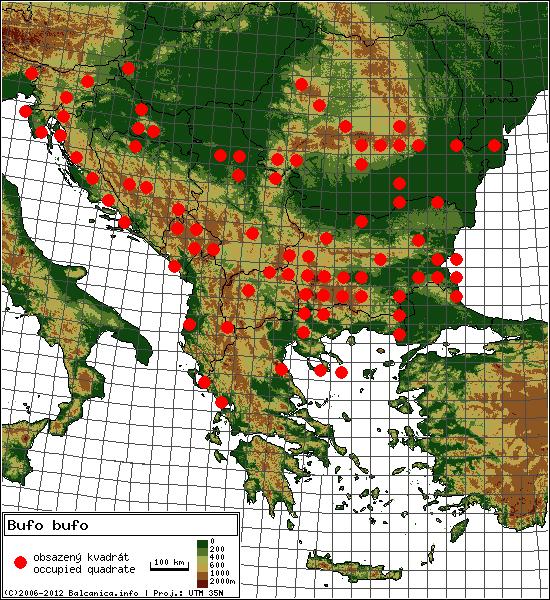 Bufo bufo - mapa všech obsazených kvadrátů, UTM 50x50 km