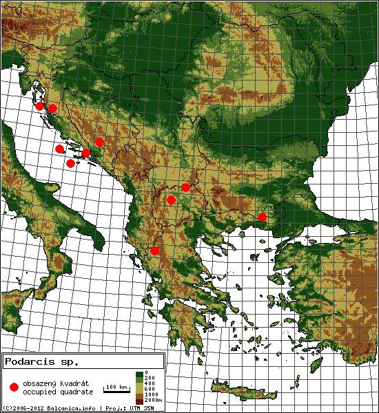Podarcis sp. - mapa všech obsazených kvadrátů, UTM 50x50 km