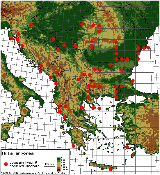 Hyla arborea - mapa všech obsazených kvadrátů, UTM 50x50 km