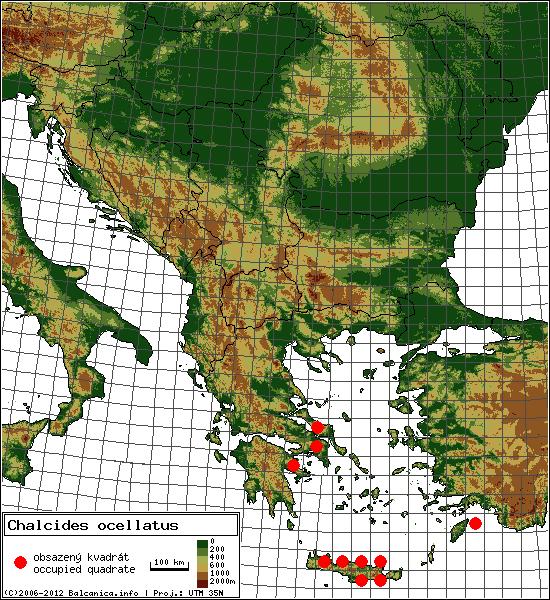 Chalcides ocellatus - mapa všech obsazených kvadrátů, UTM 50x50 km