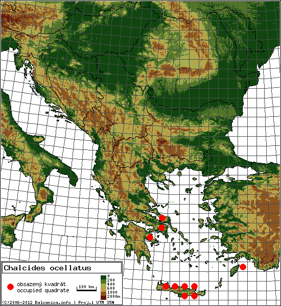 Chalcides ocellatus - Map of all occupied quadrates, UTM 50x50 km