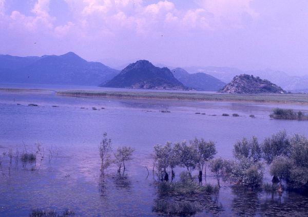 Skadarské jezero, Skadar lake