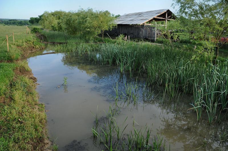 Pocola