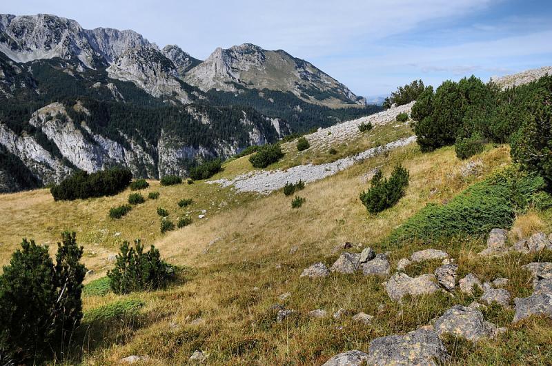 Habitat V. b. bosniensis a nejen jí.