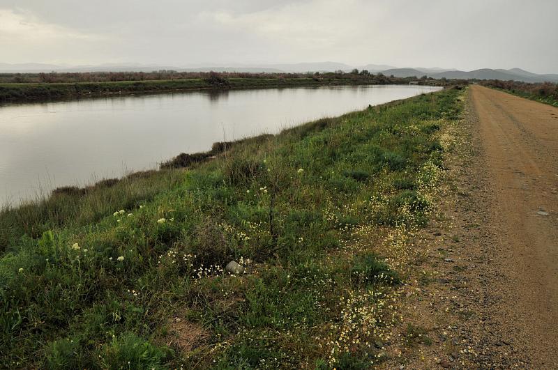 Evros delta