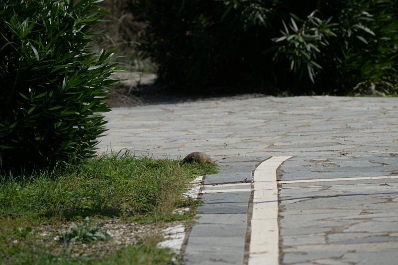 Ioánnina,  Ioannina,  Giannina