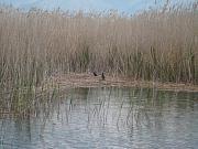 Prespa e Vogël, Prespa e Vogel, Kleiner Presba-See, Lake Mala Prespa, Lake Mikra Prespa, Limni Mikra Prespa, Limni Mikri Prespa, Liqen i Prespes se Vogel, Liqen i Prespës së Vogël, Liqen' i Prespes Vogel, Liqen' i Prespës Vogël, Límni Mikrá Préspa, Límní Mikrí Préspa, Mala Presba, Ventrok Lake