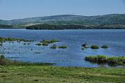 Vlasinsko Jezero, Vlasinsko Blato