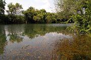 Řeka Veleka - mělké prosluněné břehy jsou lokalitou zejména želv Emys orbicularis a užovek Natrix natrix.