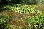 Omišaljsko jezero