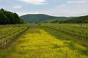 Vrbničko polje