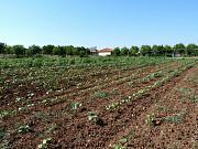 Maronía, Maronia