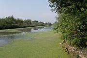 Galovica, Surcin