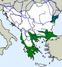 rozšíření hroznýška tureckého Eryx jaculus na Balkáně (zeleně)