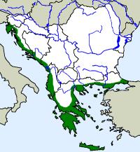 rozšíření gekona tureckého na Balkáně (zeleně)